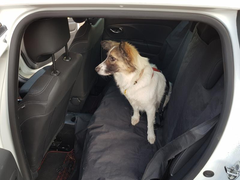 Hunde im StattAuto: Ja – aber unter Beachtung einiger Regeln.